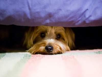 Confira quais cuidados você deve ter com os animais de estimação durante a pandemia