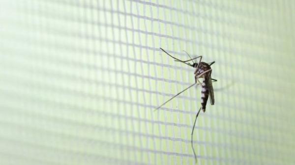 Cinco mortes no Espirito Santo por dengue nos primeiros três meses de 2020