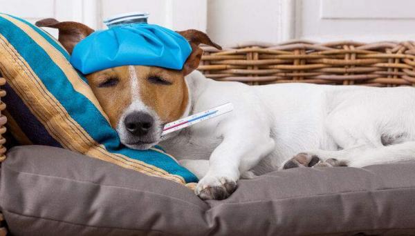 Coronavírus: cães e gatos também podem desenvolver a doença?